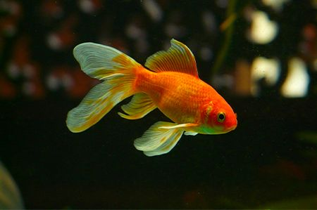 Picture for category Poissons
